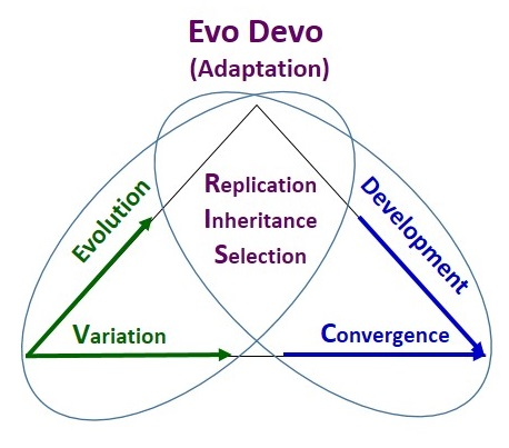 The VRISC Model of Self-Organization (Evolutionary Development)