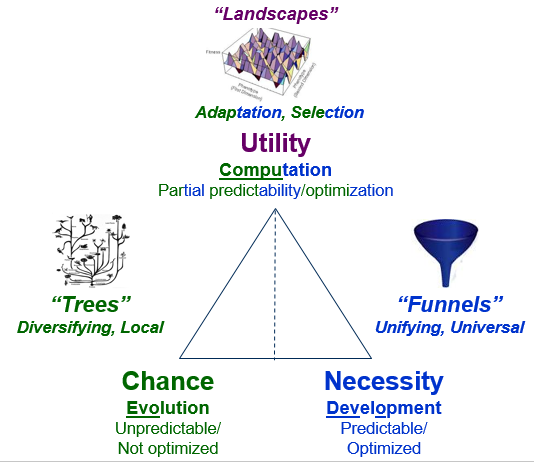 Chance, Necessity, and Utility (Evo, Devo, and Adaptive Change)