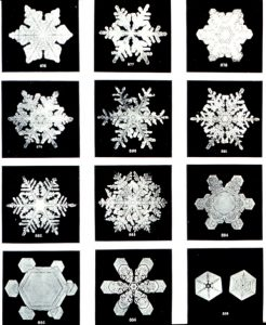 Each Snowflake is Evolutionarily Unique, and Developmentally the Same
